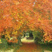 Eye Cemetery - Autumn colours